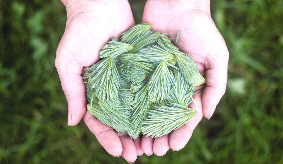 Handful of Pines