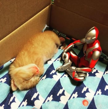 Ultraman With Kitten