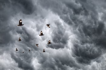 Birds flying in front of storm clouds