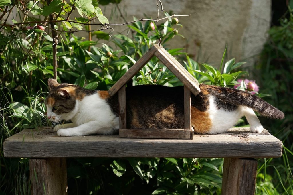 Cat half-in and half-out of a birdhouse