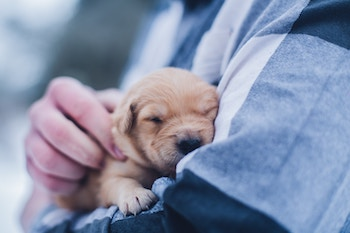 Small puppy in a person's arms