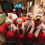5 dogs on a red couch in a living room with Christmas decorations